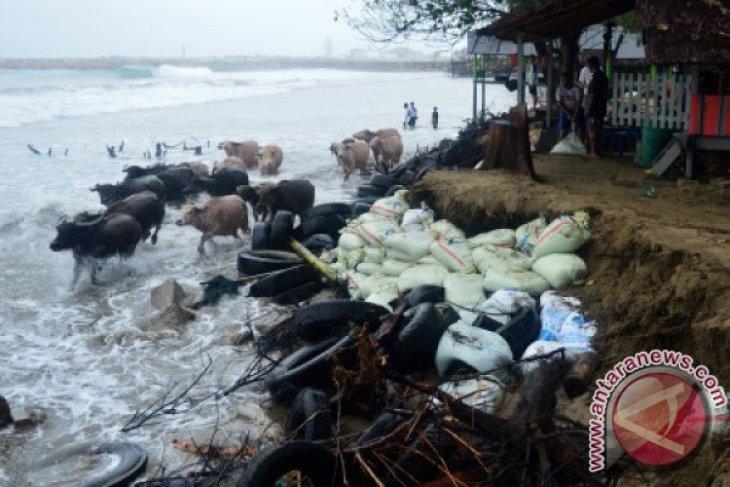Gelombang pasang landa pesisir Aceh Barat