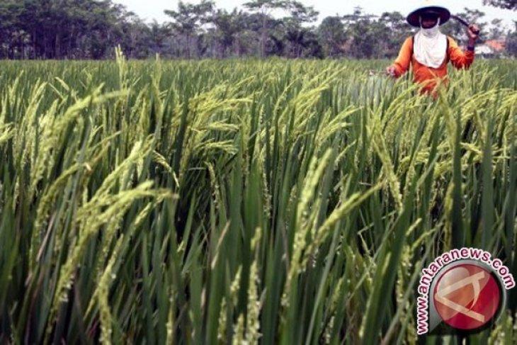 Sektor Pertanian Butuh Generasi Muda