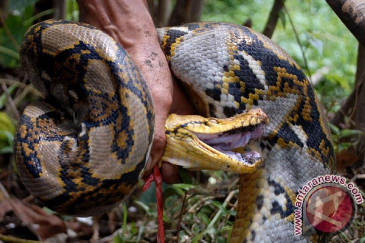 Tips menghindari gigitan ular