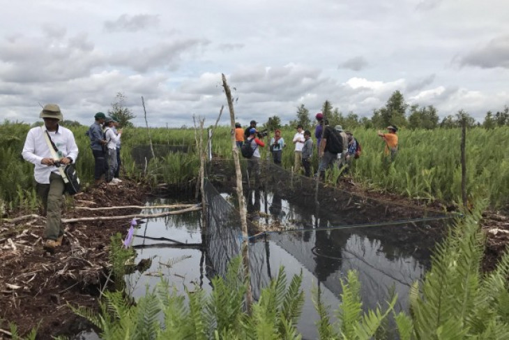 BRG claims less hot spots detected in intervened peatland