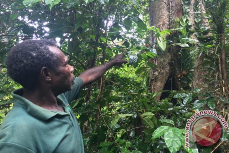 Hutan Adat, keadilan untuk masyarakat Papua