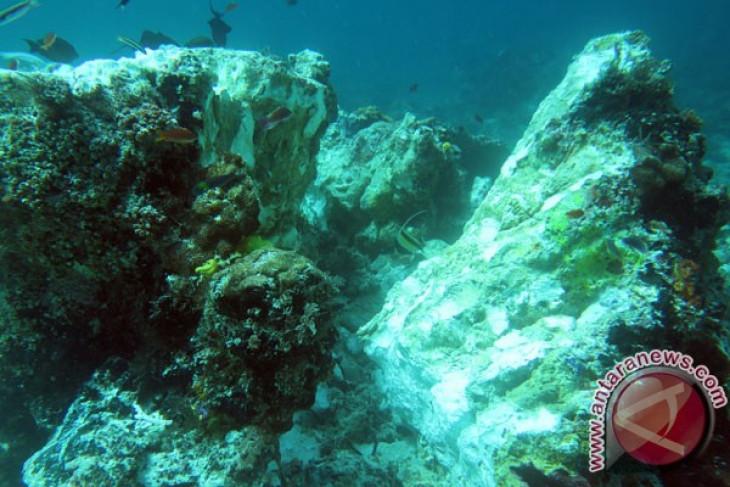 MV Caledonian Sky perusak terumbu karang Raja Ampat