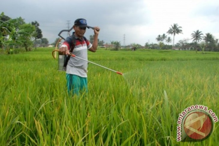 Ratusan Hektare Sawah Gagal Panen Dapat Asuransi