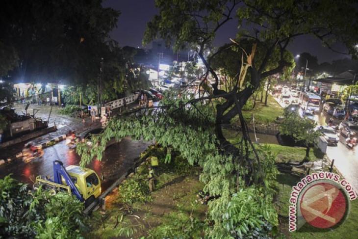Pohon-pohon di Jalan Sudirman-Jalan Thamrin akan dipindah