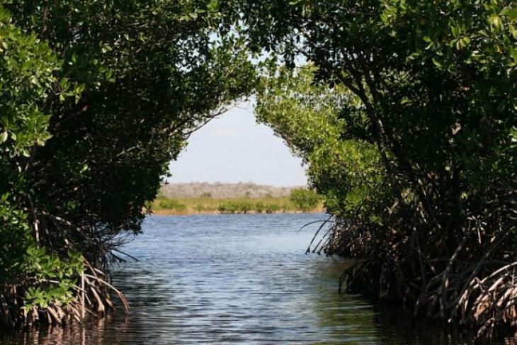 STIA Mataram tanam 1.000 batang bibit mangrove