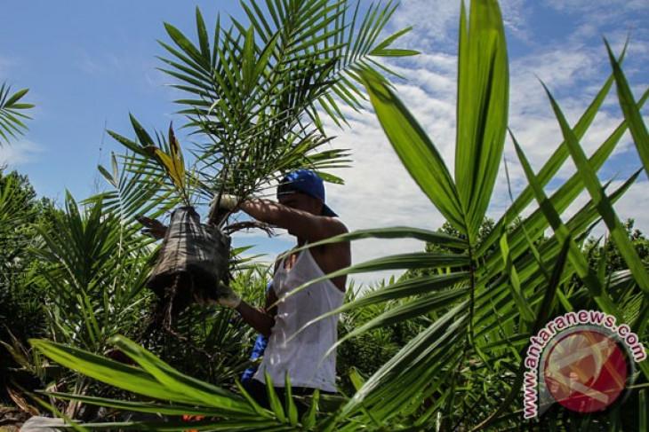 Parlemen Eropa akan voting kelapa sawit Indonesia