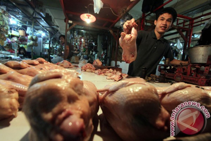 Polisi selidiki penyebab harga daging ayam meroket