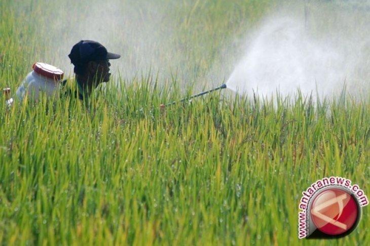 BPTP menerapkan inovasi teknologi genjot produksi padi