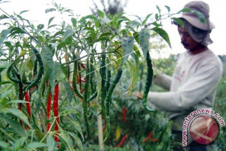 Disperindag cabai rawit di pasar produksi lokal