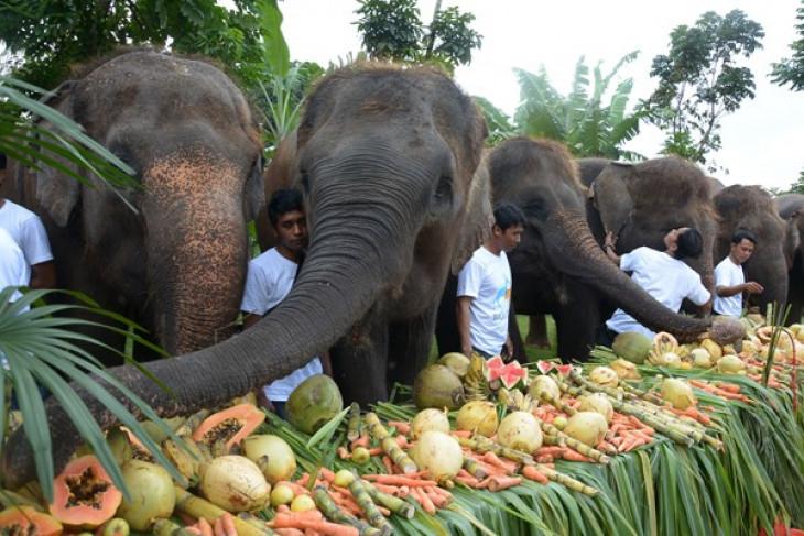 Bali Zoo manjakan gajah dengan prasmanan buah