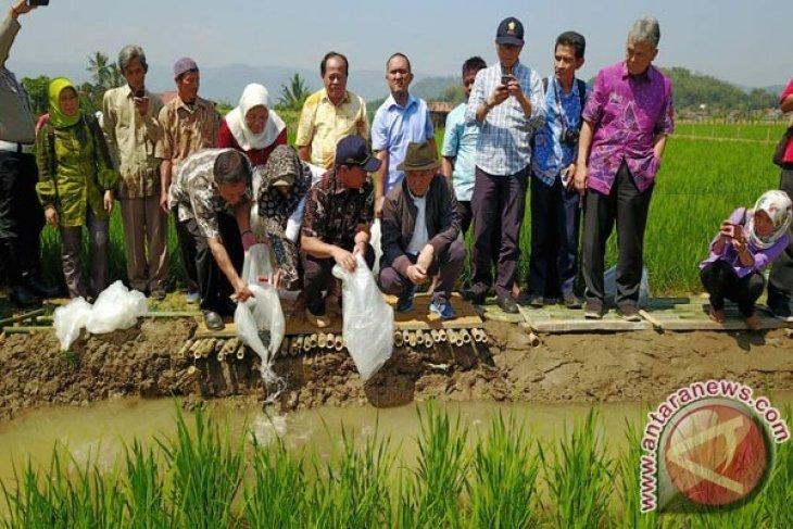 Program Minapadi Digalakkan BBPBAT Sukabumi