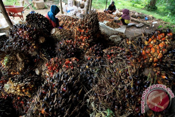Downstream palm oil industry growing