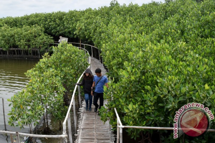 Disporbudpar of Mimika to develop mangrove tourism