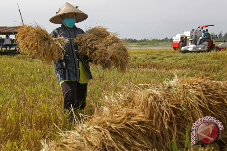 Farmers stage rally against planned rice imports