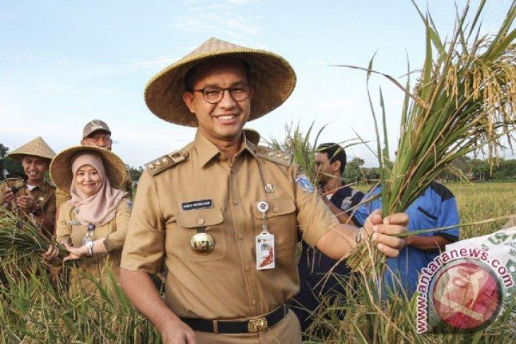 Anies panen padi di Cakung