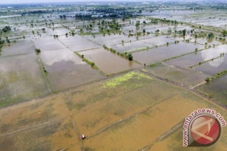 Sawah Terendam Banjir