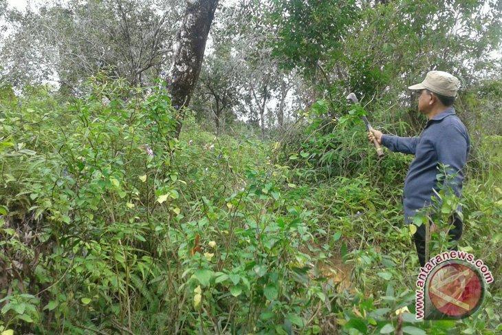 Warga Nagan Raya tuding lahan dikuasai perusahaan