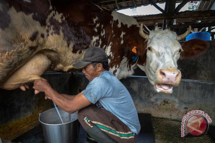 Program kemitraan tingkatkan kesejahteraan peternak sapi