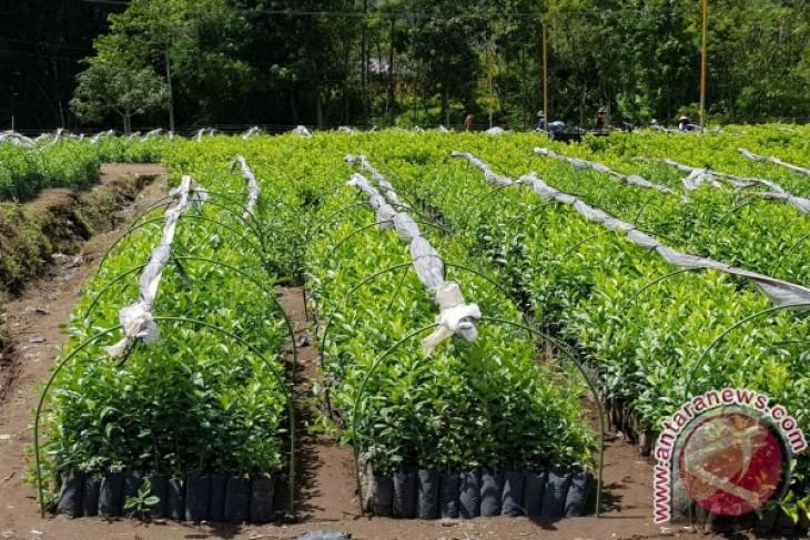 Balitbangtan siapkan 1,2 juta benih jeruk