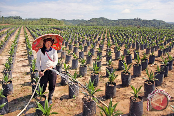 Indonesia, India ensure sustainable palm oil production and trade