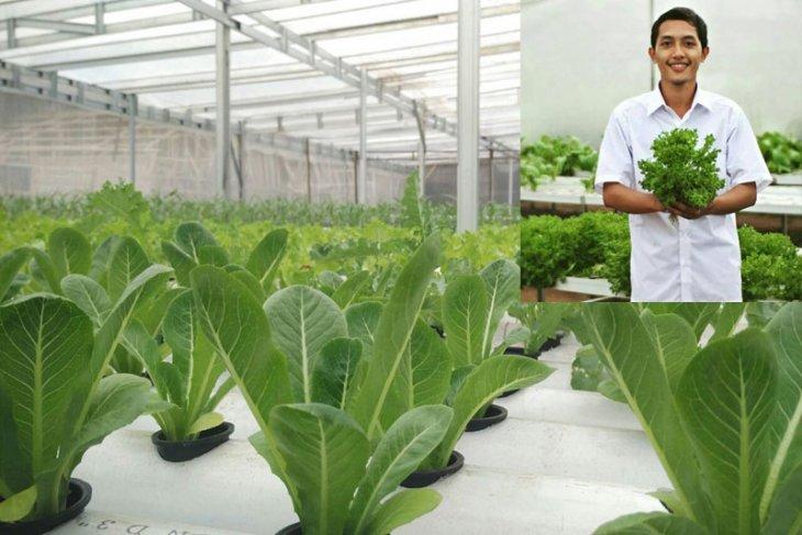 Muda berjaya, alumni IPB kembangkan usaha pertanian perkotaan