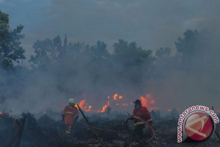 KLHK: terjadi peningkatan titik api bulan Juni