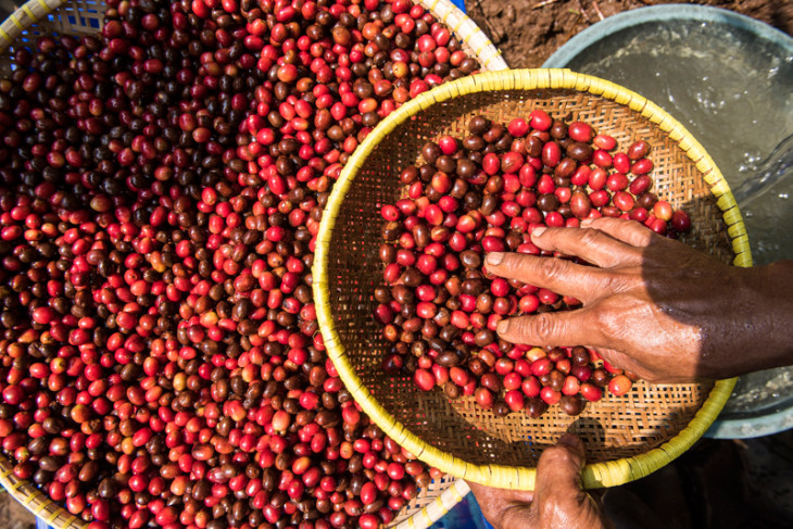 Transaksi kopi Indonesia Rp80 miliar di WOC