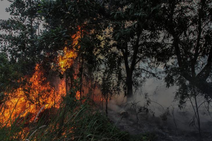 1,5 hektare lahan warga di Bengkalis terbakar