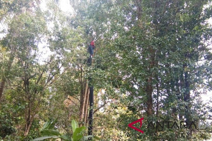 Perkuat standarisasi, Pemprov Bali dongkrak daya tawar petani cengkih