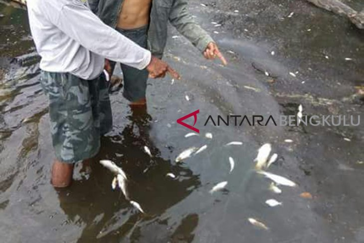 DLH Mukomuko selidiki ikan mati di sungai