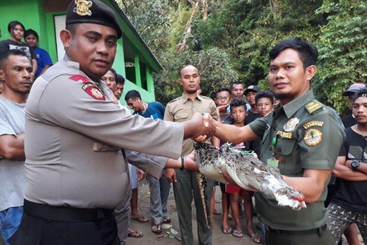 BKSDA Maluku pasang perangkap buaya di tiga lokasi