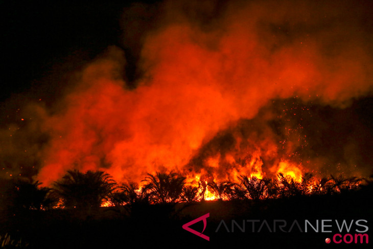 Ratusan hektare kebun sawit terbakar
