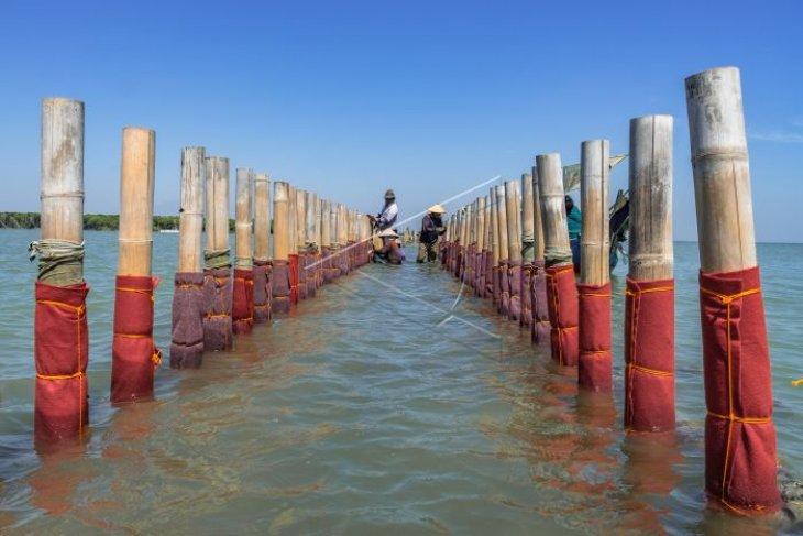 Perawatan konstruksi bambu pemecah gelombang ambang rendah