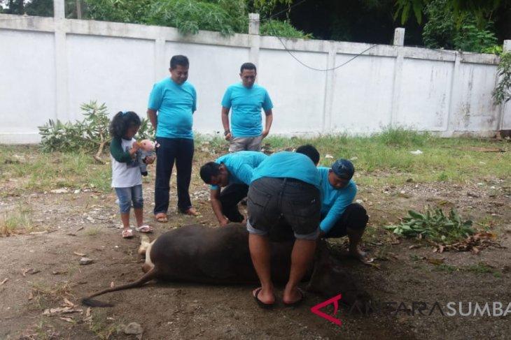 Wujud toleransi, bupati badung serahkan hewan kurban