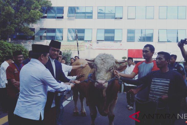 Anies serahkan Sapi Limousin ke panitia kurban