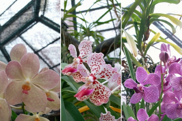 142 rare orchids planted in Bangka Belitung for flora preservation