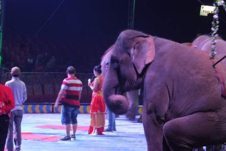 MKSI apresiasi Oriental Circus akhiri penggunaan satwa