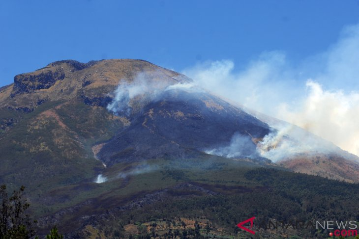Mount Sindoro`s forest fire extinguished: BNPB spokesman