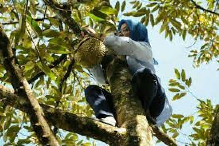Petani Berharap Pemkab Lebak Bangun Pasar Durian