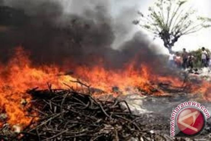 Ratusan hektare lahan gambut di Penajam terbakar