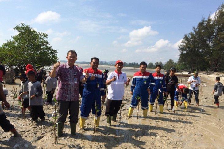 Pertamina hadirkan taman edukasi mangrove  di pesisir Pangkal Pinang  (video)