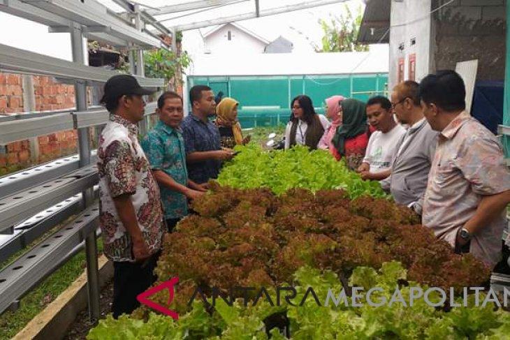Pemuda Sukabumi manfaatkan lahan rumah untuk bertani