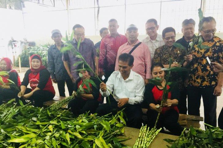 Permintaan ekspor tanaman hias Bambu Suji dan Lidah Mertua tinggi