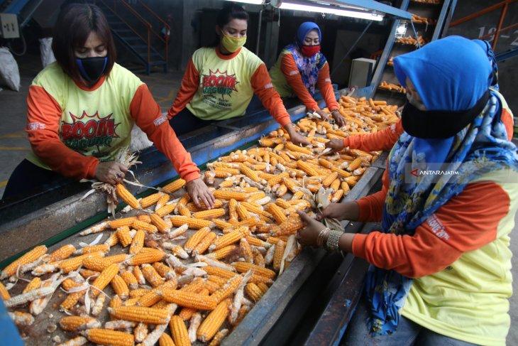 Pemprov salurkan benih jagung kepada petani Kabupaten Gorontalo