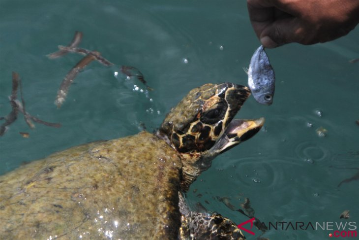 Conservationist reveals 17 sea turtle nests spotted at Trisik Beach