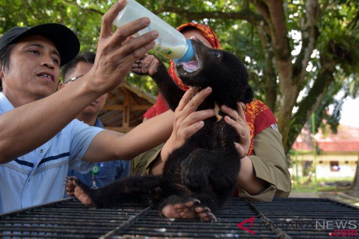 Riau tawarkan adopsi tiga bayi beruang madu