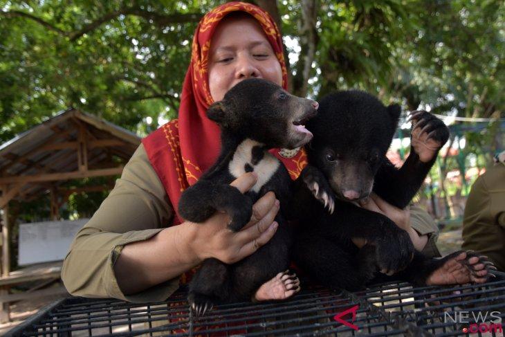 BBKSDA Riau rawat 3 bayi beruang madu telantar
