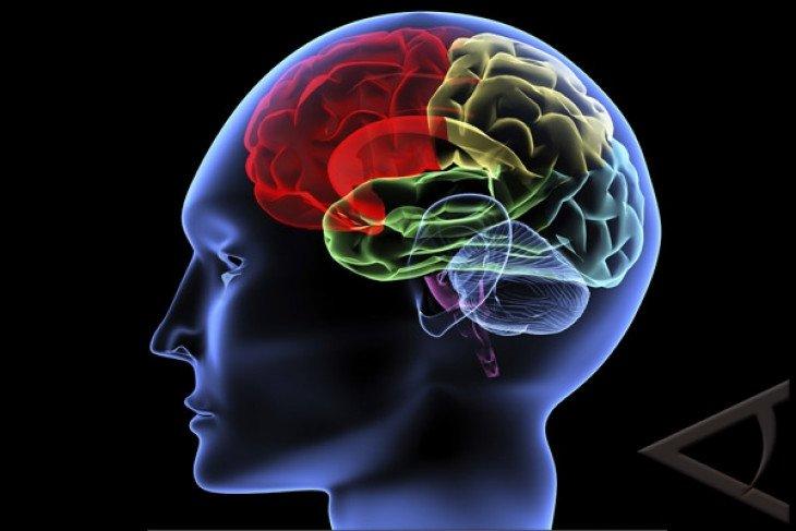Begini sistem kerja syaraf otak