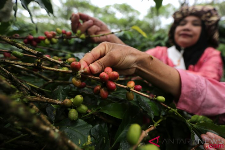 Indonesia ranked fourth as global coffee producer