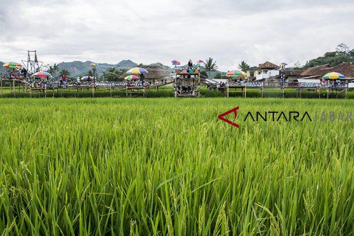 Agro Wisata Minapadi Sawah Lega